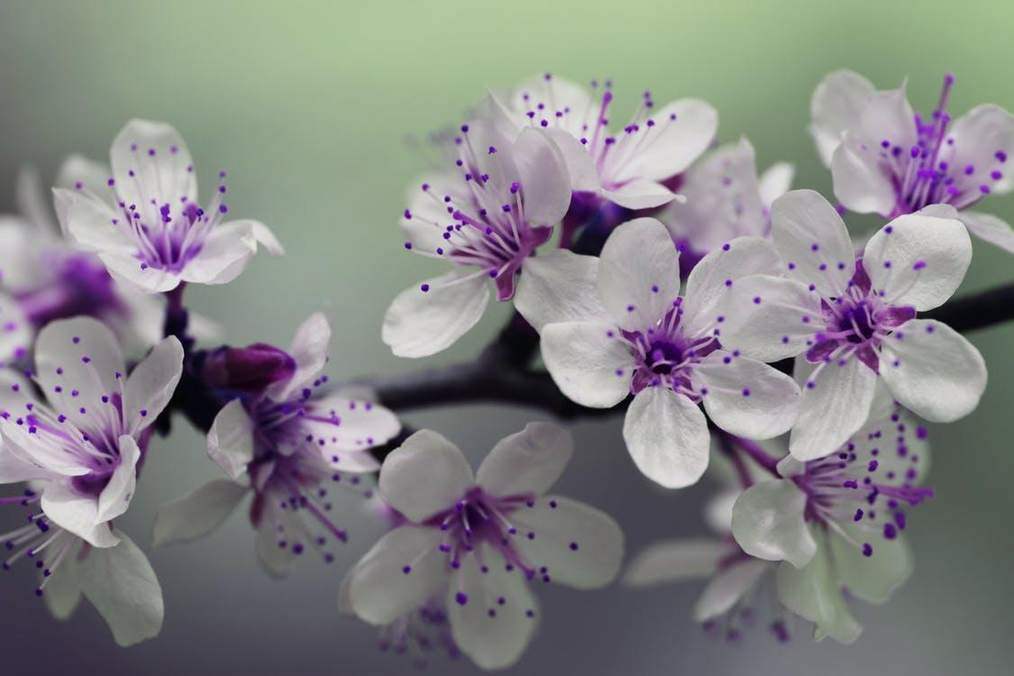 Grow Your Garden of Abundance